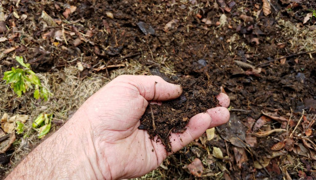 pourquoi-compost-pour-les-plantes-gazon