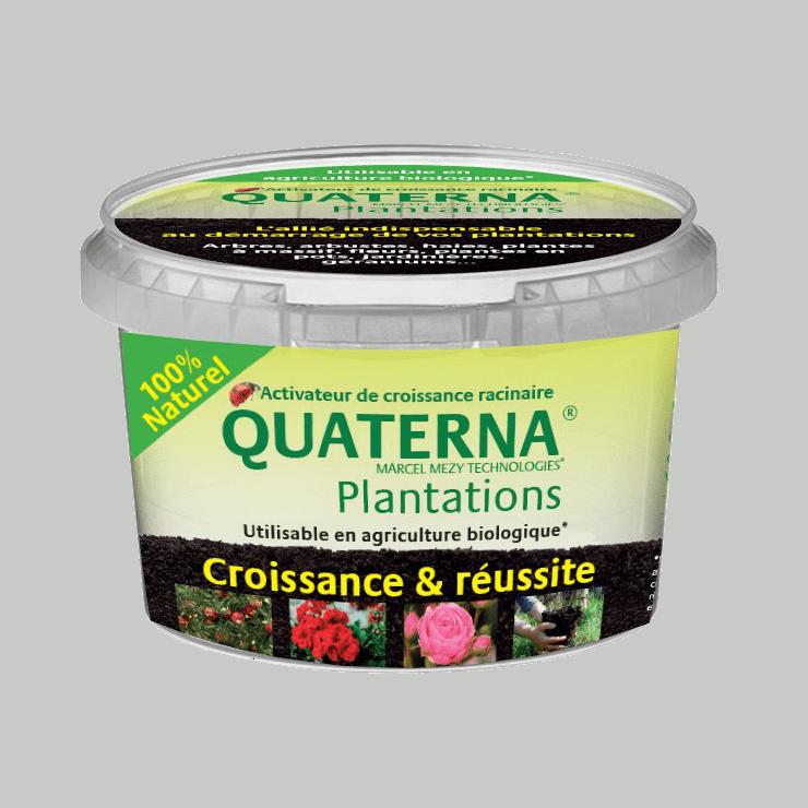 quaterna-plantation